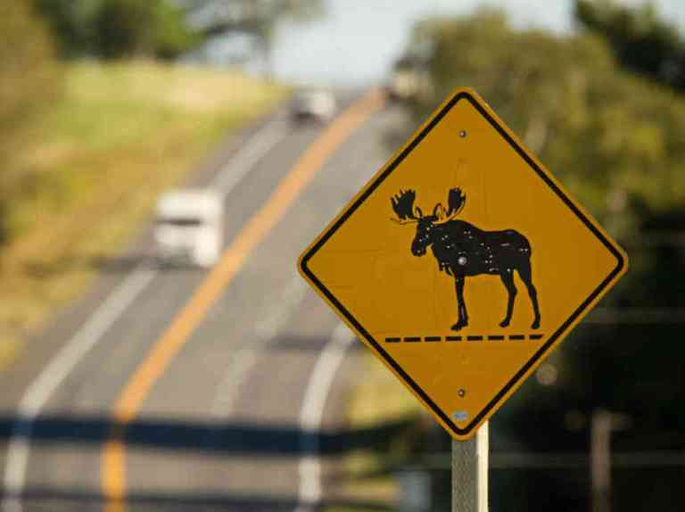 Maine Moose Xing